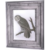 Owl Canvas - Ornate Frame Effect