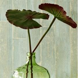 Designer Wallpaper - Brian Yates - Wood Effect - Green