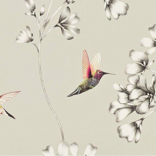 Designer wallpaper- AMAZILIA